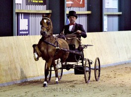 Meer foto's van hackney Pony off the Year Magic Victory