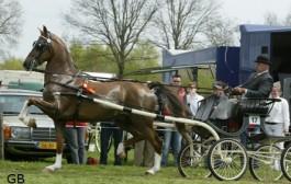 Cavoro Heidezicht (2007, Manno uit Lavira ster van Bariton)