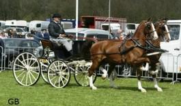 Alfredo en Cavanerno (2007,Saffraan uit Vannerna,ster van Patijn