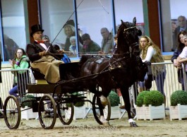 'Meer foto's van hackney Horse off the Year Wentworth Ebony