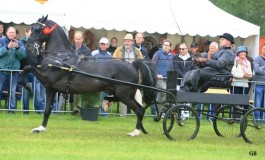 Dag van het Aangespannen paard levert 6 overwinningen op