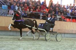 Eebert wint wederom hengstencompetitie