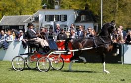 Hubert (2012 Cizandro uit Veldine, keur preferent van Manno)