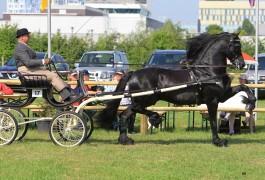 ULDRIK 457 (2006, Dries 421 x Tsjerk 328)
