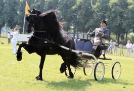 7 keer op kop op laatste Dag van het Aangespannen Paard